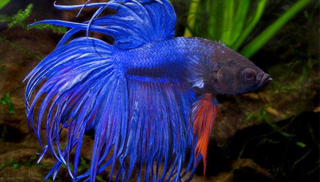 Tropical Fish Intl